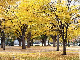 北海道の美味しいもの市場 食欲の秋 北海道グルメ通販 札幌大通公園 美しい紅葉