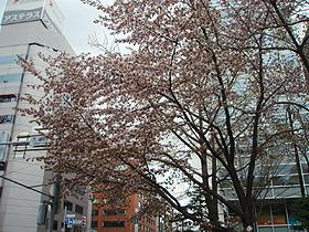 北海道グルメ彩都 スタッフ日誌 春の大通公園