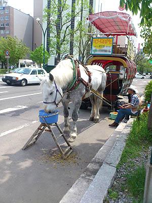 北海道グルメ彩都 スタッフ日誌 札幌大通公園の馬