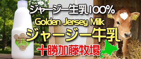ジャージー生乳100% 十勝 十勝加藤牧場 ジャージー牛乳 Golden Jersey Milk