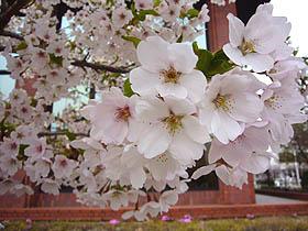 綺麗な花で心も和みます。